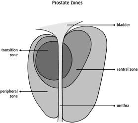 prostate-zones